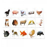 TARJETAS DE INTELIGENCIA-ANIMALES DOMESTICOS EST16