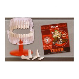 MODELO ARMABLE DENTAL E2381TE (12-96)