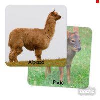 Memorice Plus Fauna Chilena Carton
